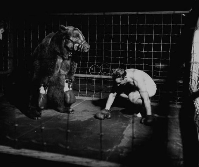 WATCH: Moron Boxes Ferocious Bear In 1930s New York